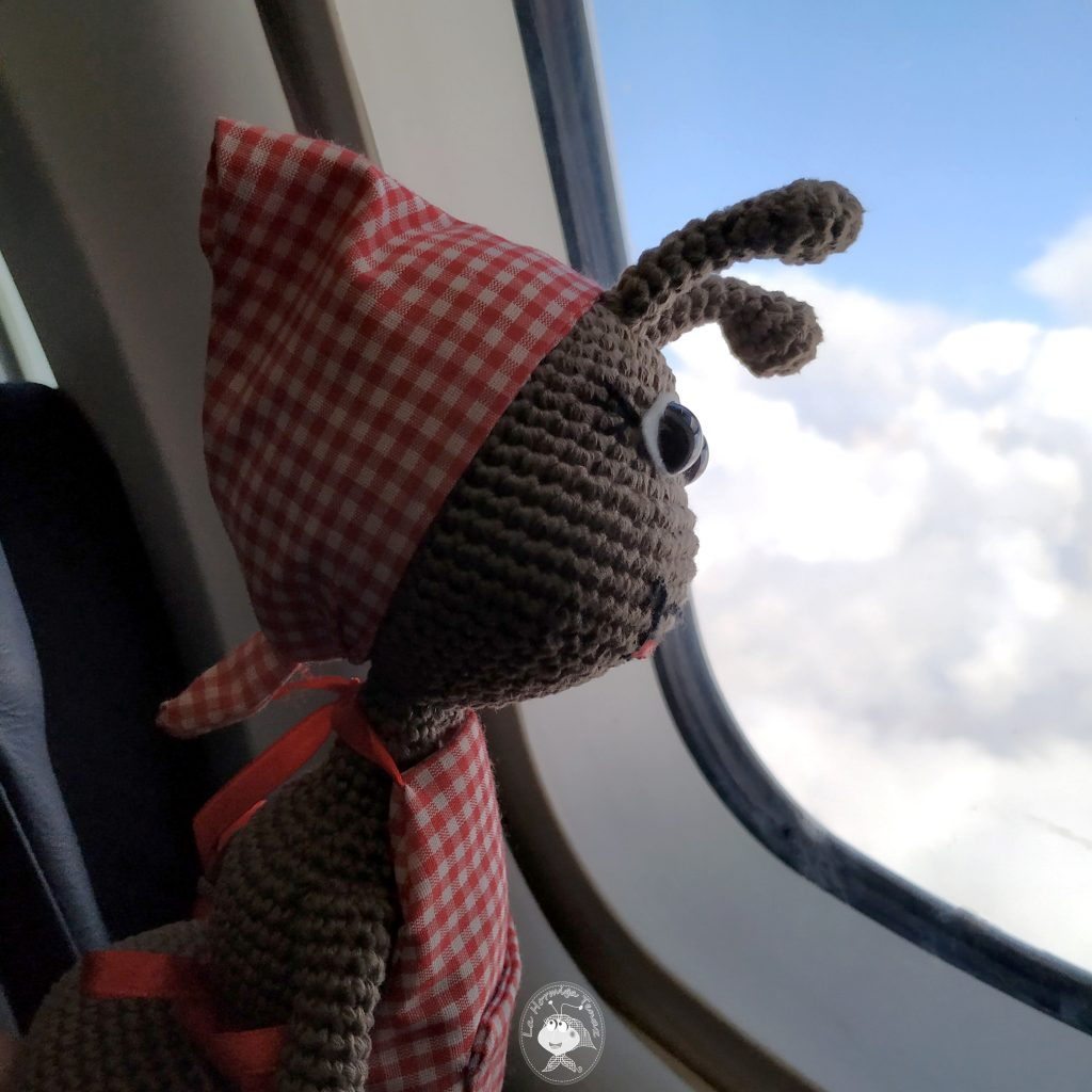 hormiga en avion